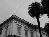 Volkenkunde Zwart Wit Buenos Aires Collection palm en bovenkant villa Jeroen Spijker